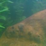 Ход строительства жилого комплекса «Ленская усадьба» в Перми идет по графику в октябре 2018. В 2019 году сдача первой очереди дома.